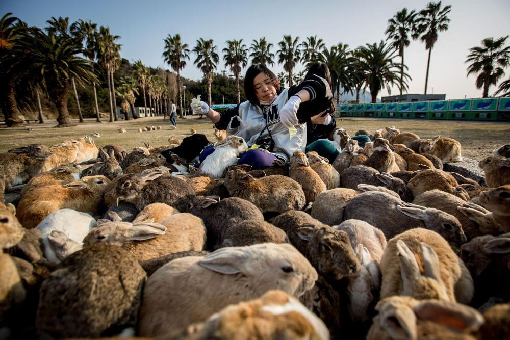 rabbit-22723-25665.jpg