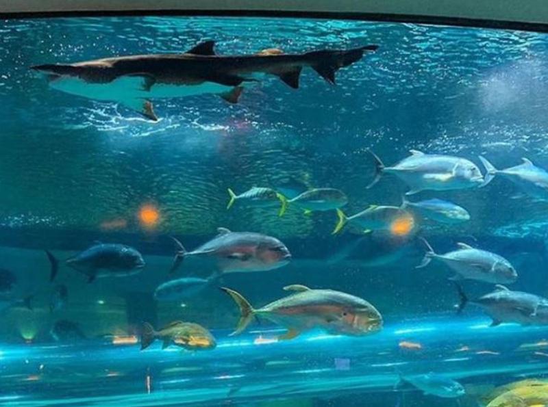 golden-nugget-fish-tank
