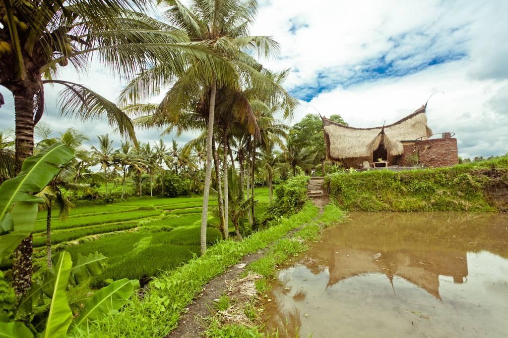 bamboo eco cottage in ubud bali
