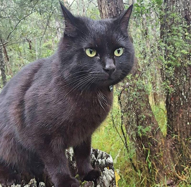 van-cat-adventure-forest