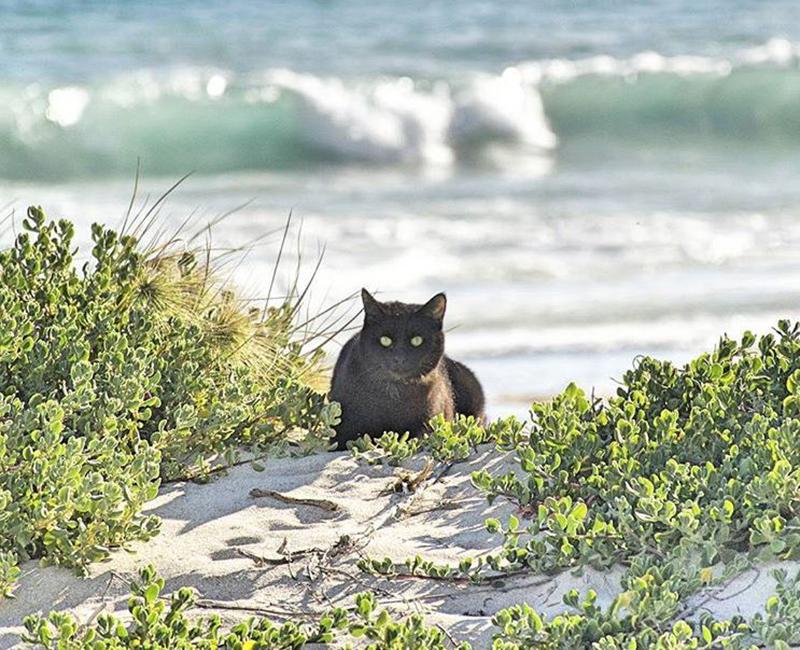 van-cat-beach-australia