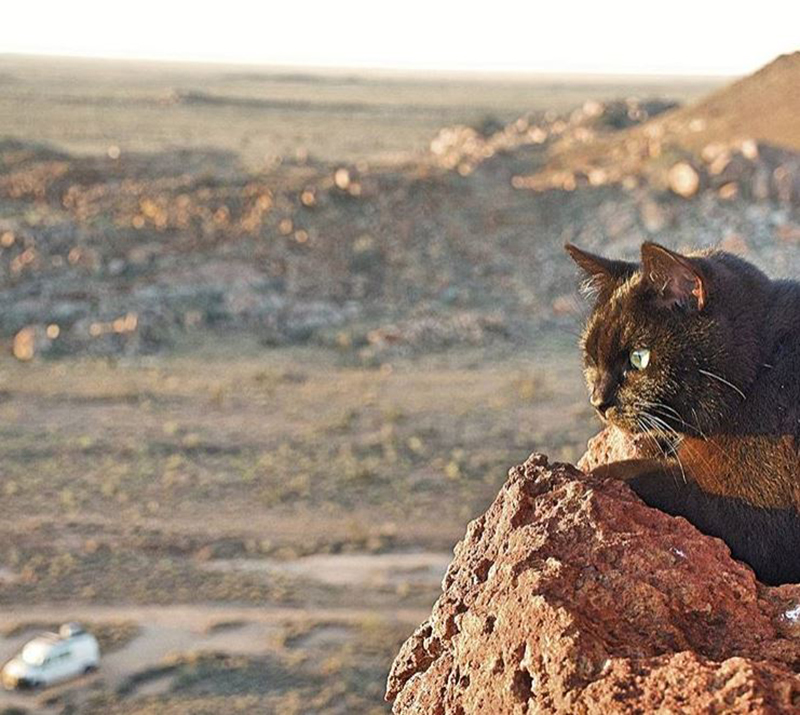 van-cat-hiking-australia
