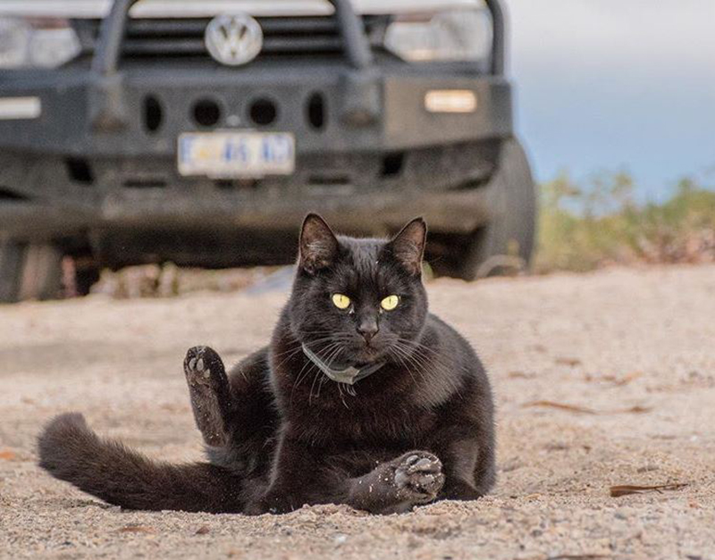 van-cat-life-travel-roadtrip