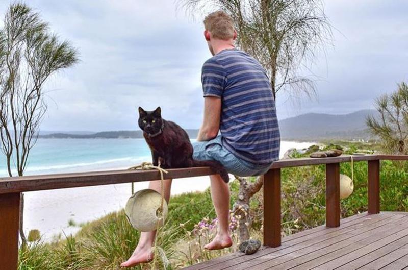 van-cat-life-travel