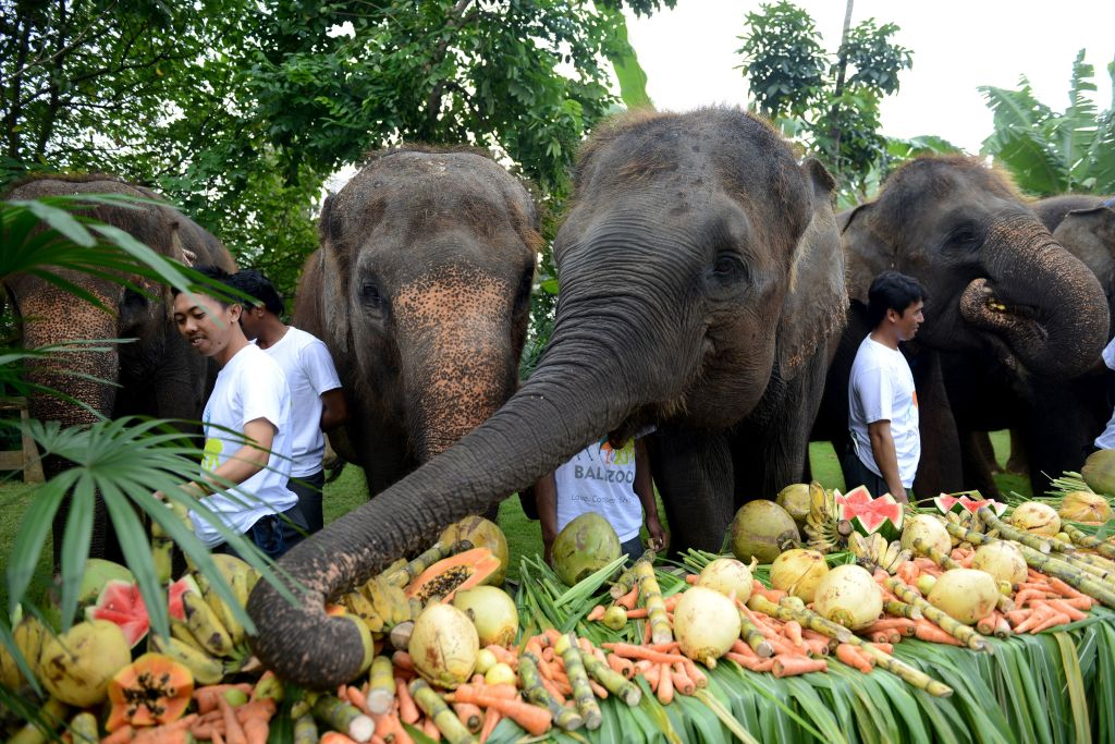 Elephants in Bali