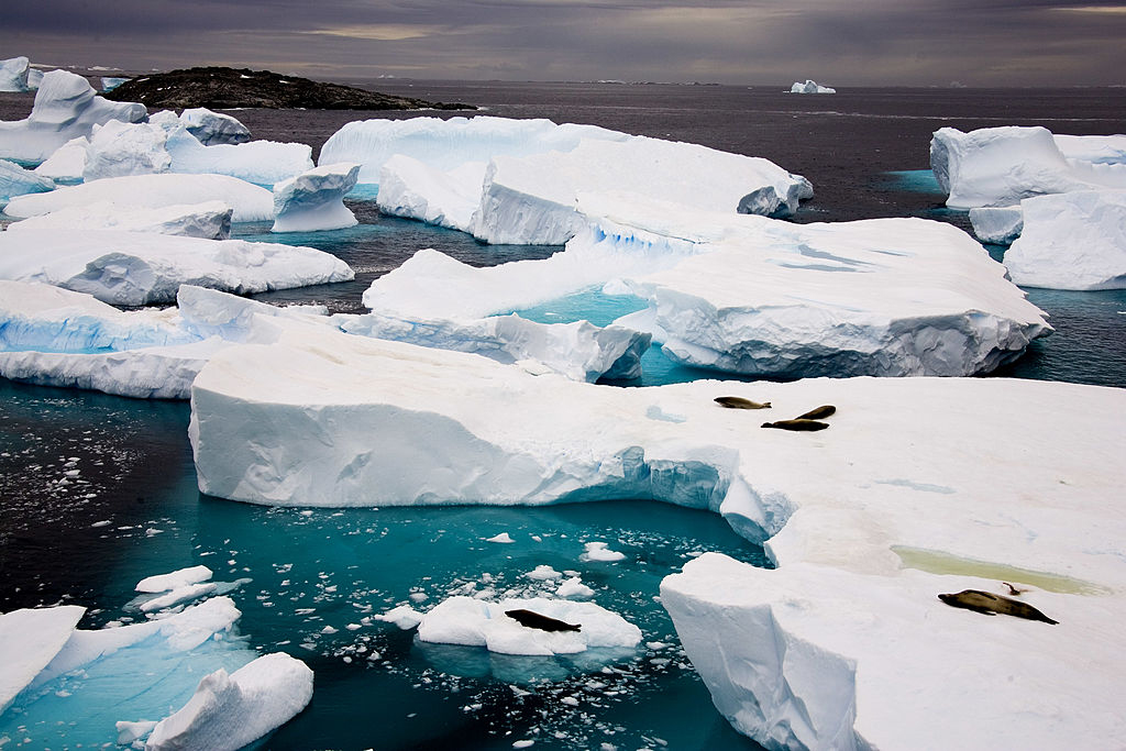 Icebergs on the island