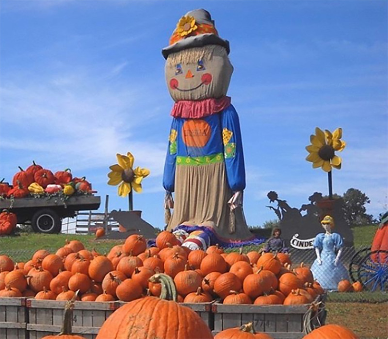 A giant but friendly-looking scarecrow overlooks a large bin of pumpkins