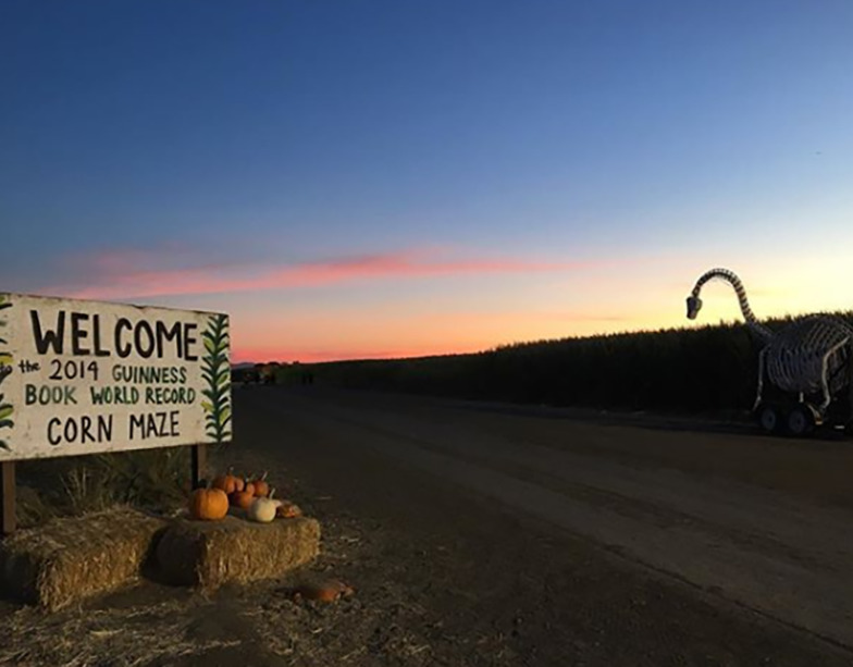 The entrance of the largest corn maze is photographed at sunset