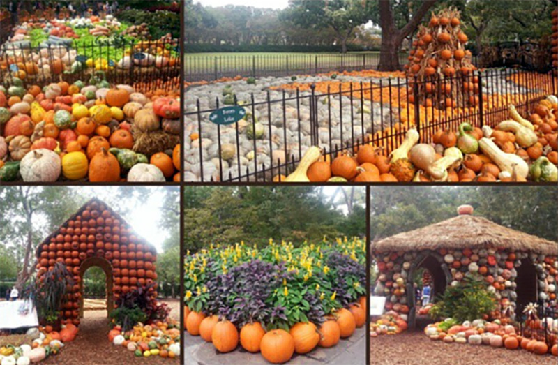 A collage shows different pumpkin displays at the Dallas Arboretum