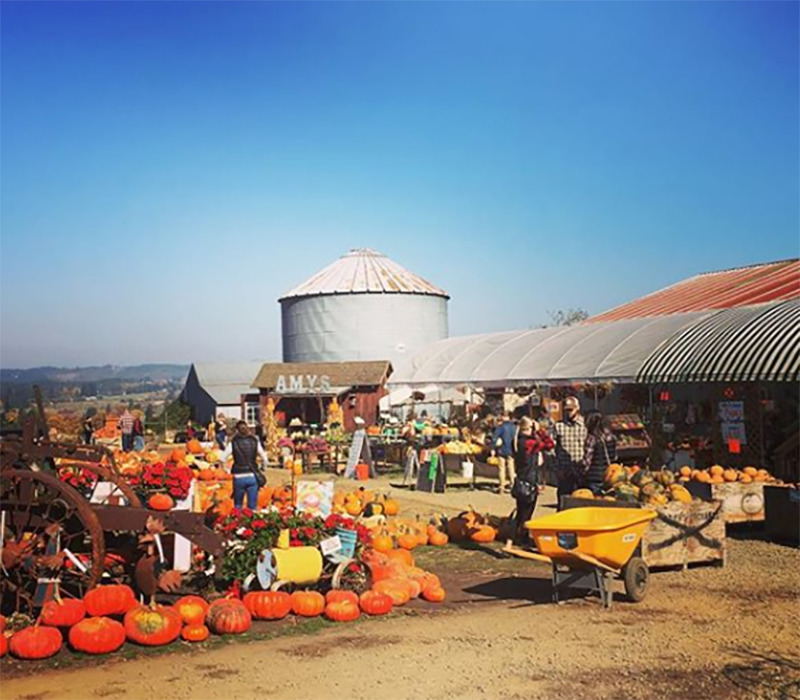 Bins of pumpkins and displays sit in a large, flat expanse