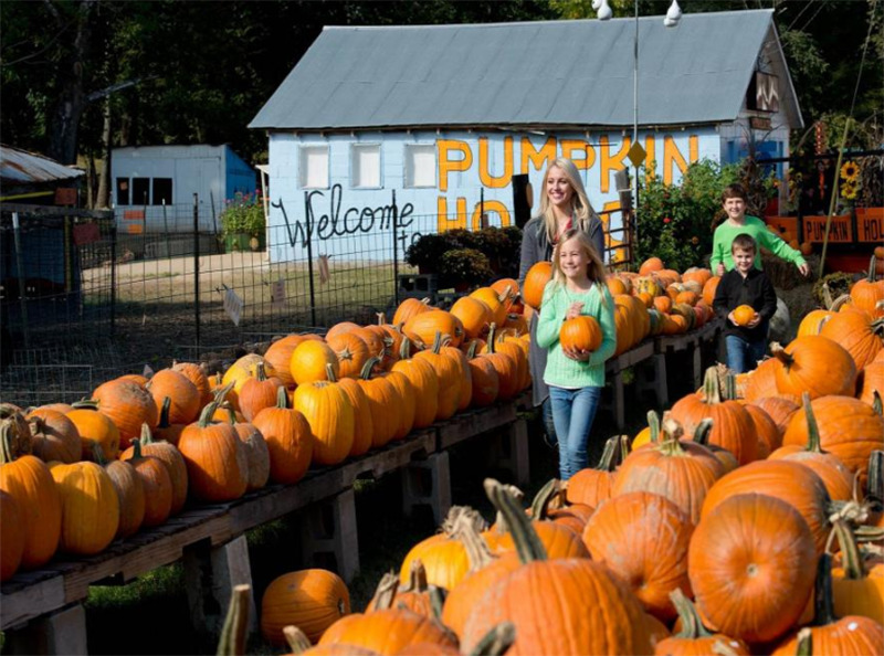 A grown woman and three children carry pumpkins while smiling