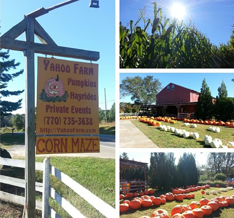 A collage shows pumpkins, a barn, and the sign to Yahoo Farm
