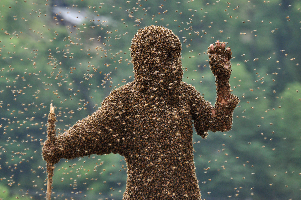 Bees cover beekeeper Lu Kongjiang as he competes in a 'bee bearding' contest