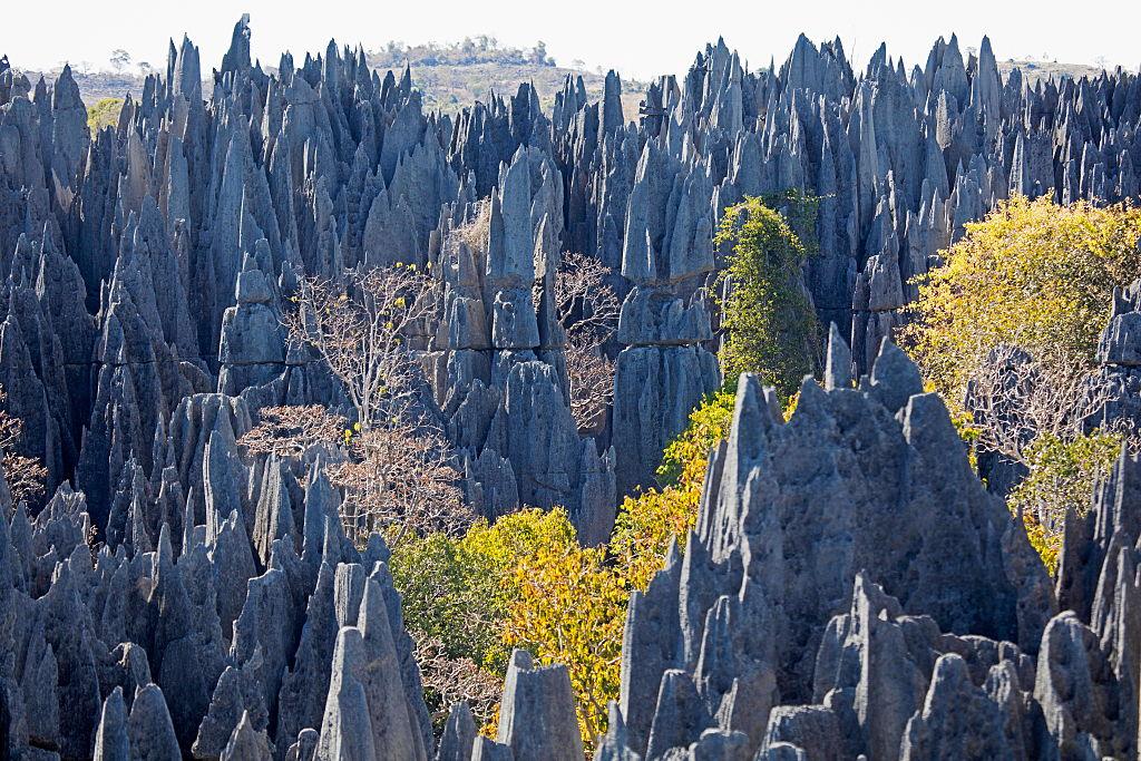 A Hike Through Stone Forest Of Madagascar