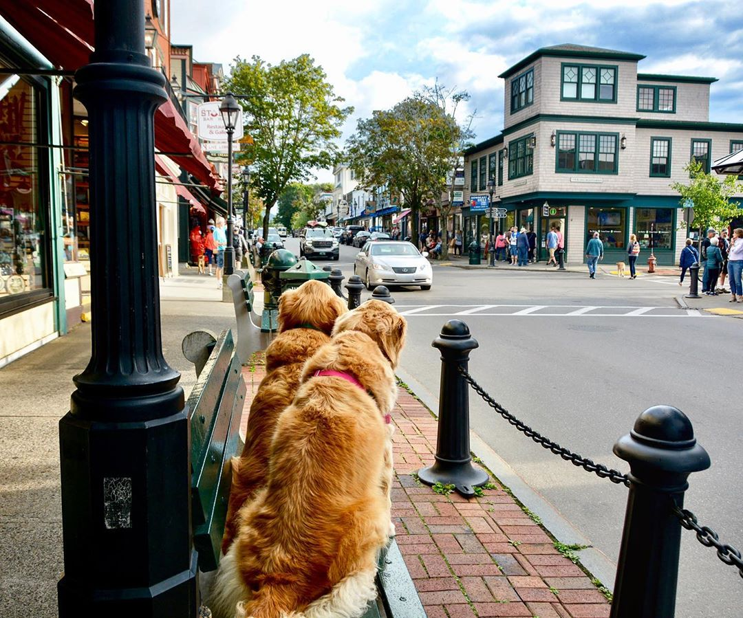 two dogs in maine