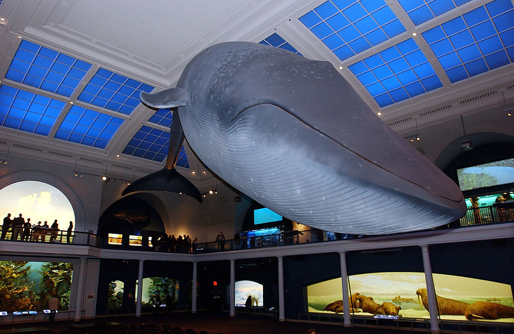 the museum of natural history in new york
