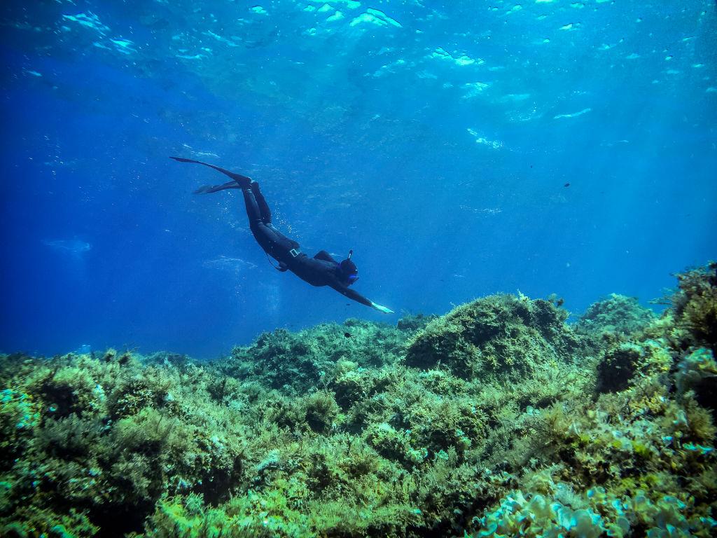 A scuba diver reaches towards a reef bed.