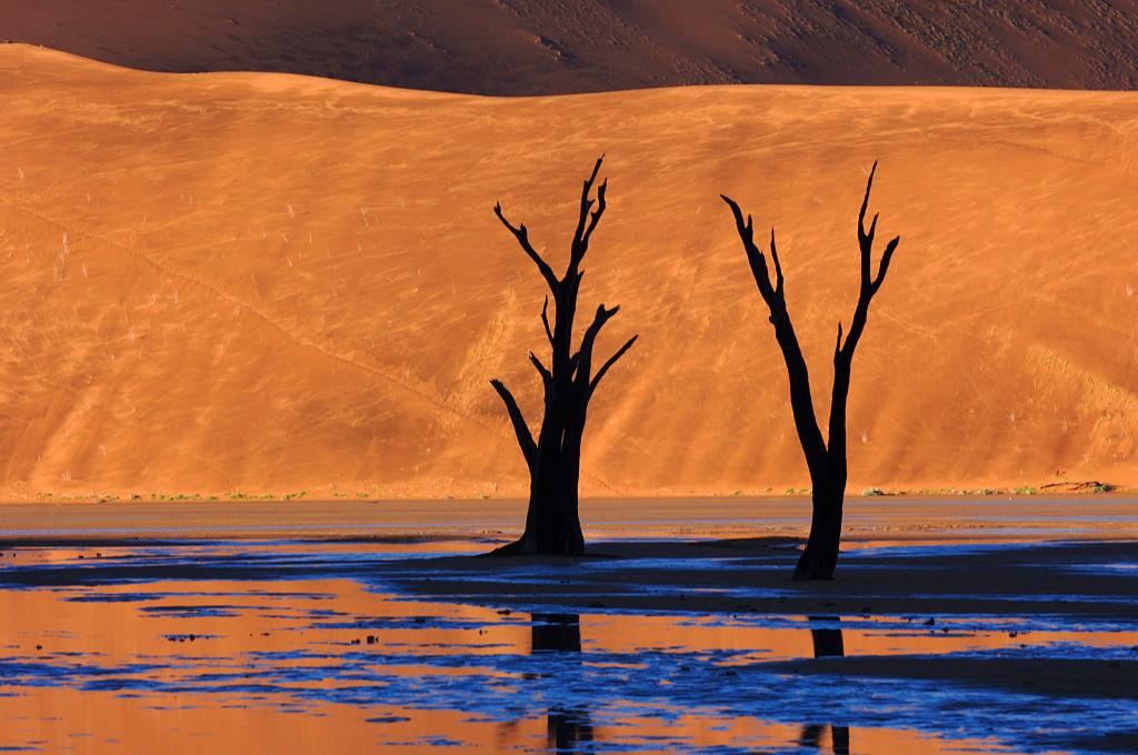 bare trees against the desert backdrop of Deadvlei, Namibia