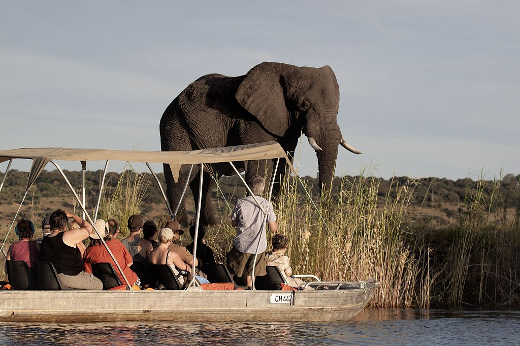 tourists looking at an elephant in a river boat in botswana