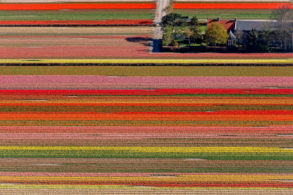 an aerial view of a tulip field and a house in the netherlands