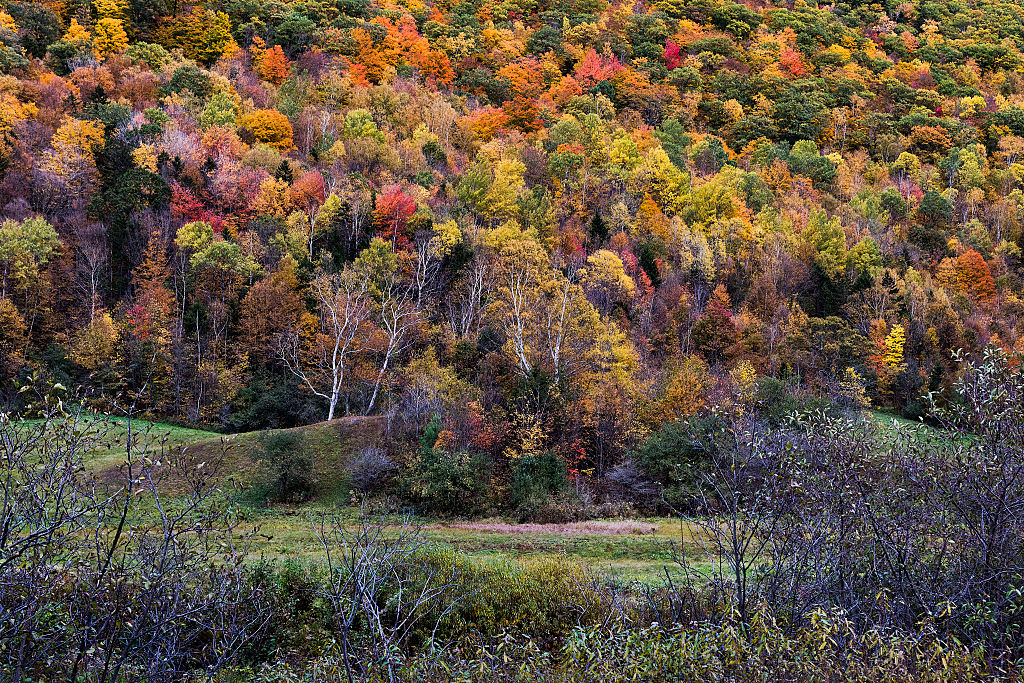 colorful trees in Killington, Vermont
