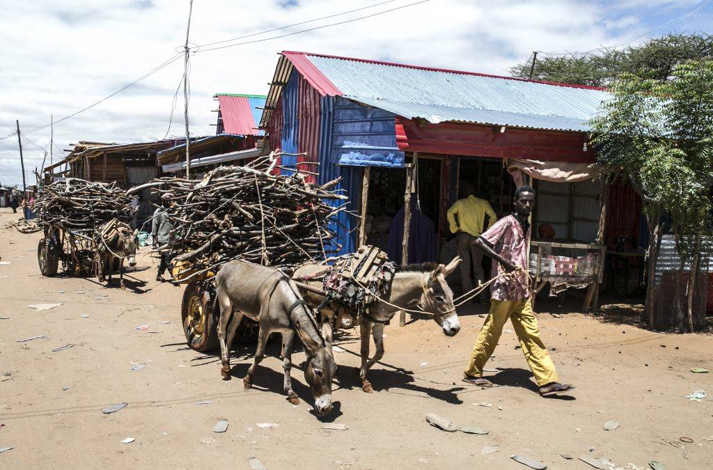 a man leading donkeys carrying sticks in mogadishu, somalia