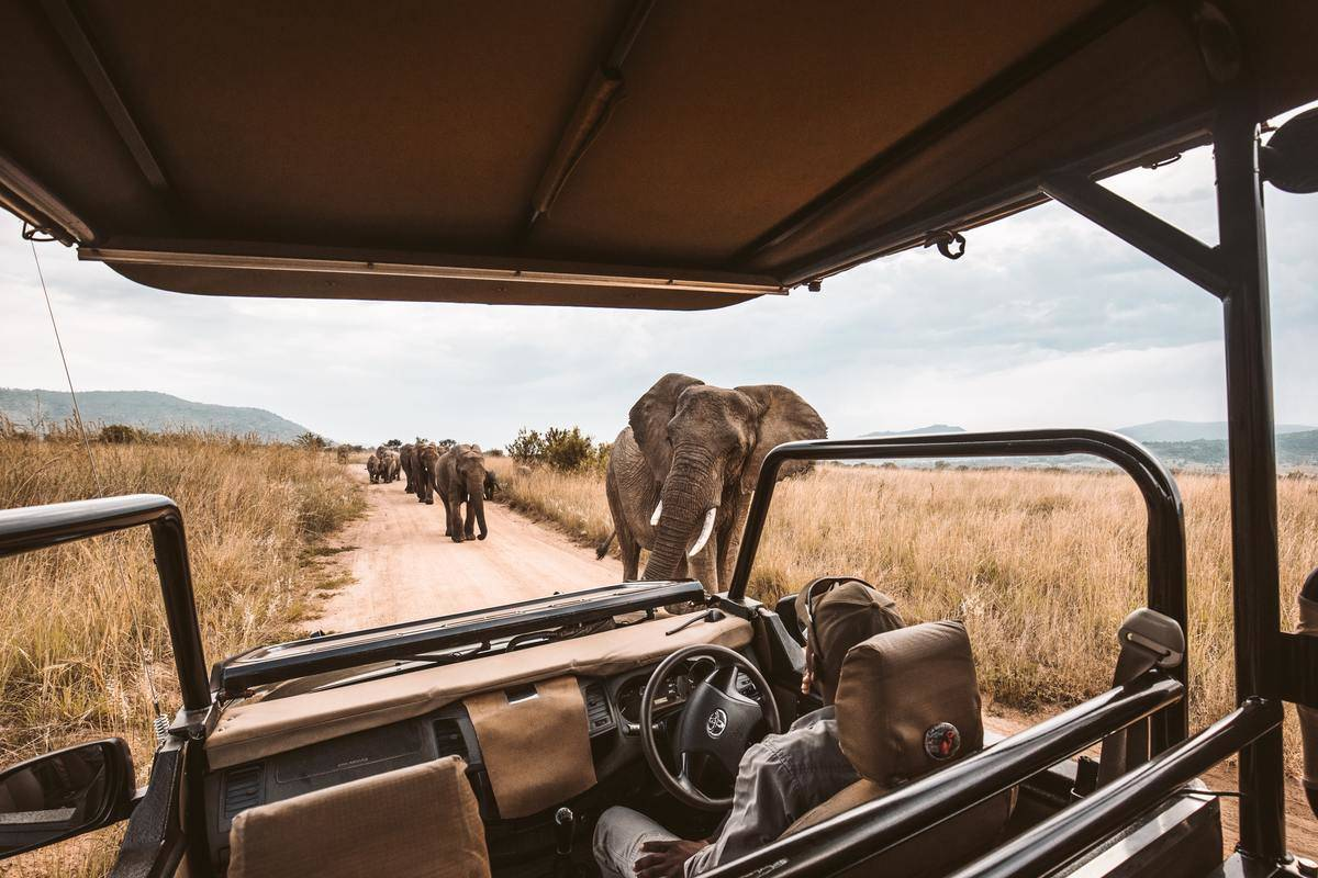 safari ride