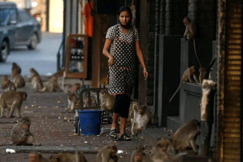 a woman feeding monkeys