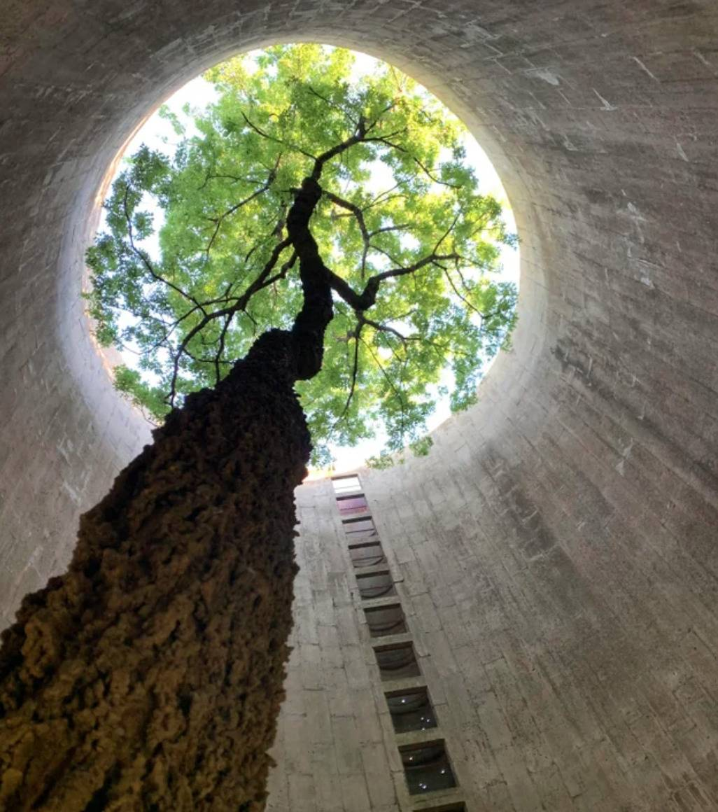 tree growing up and out in silo