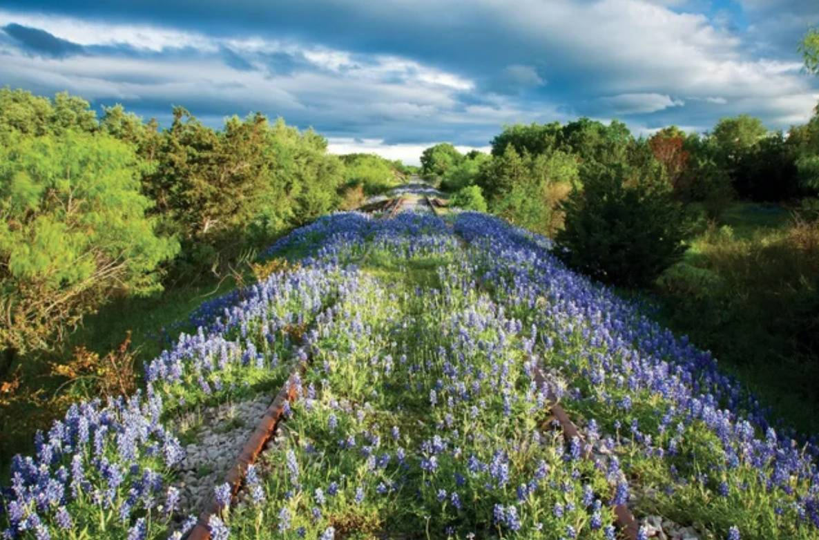 train tracks covered in wildflowers