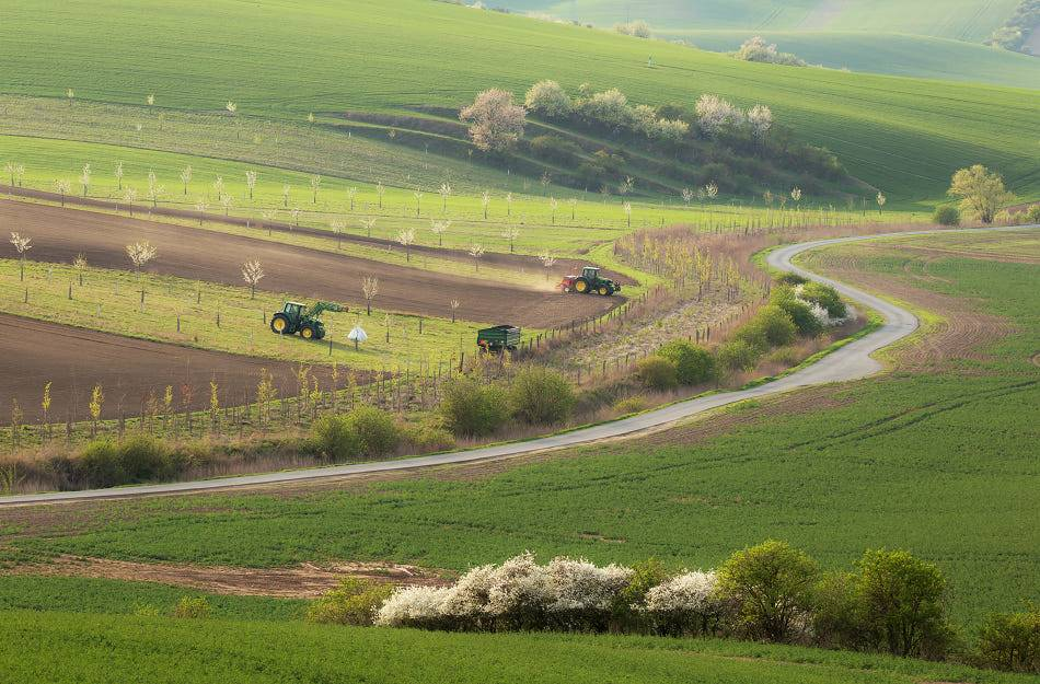 South Moravia in the spring