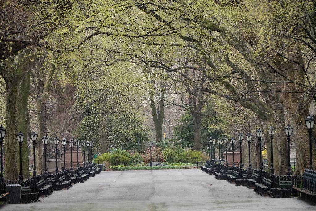 central park with empty benches and surrounded by trees