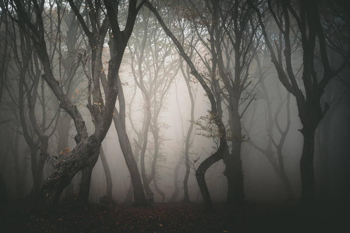 Hoia-Baciu Forest, Romania