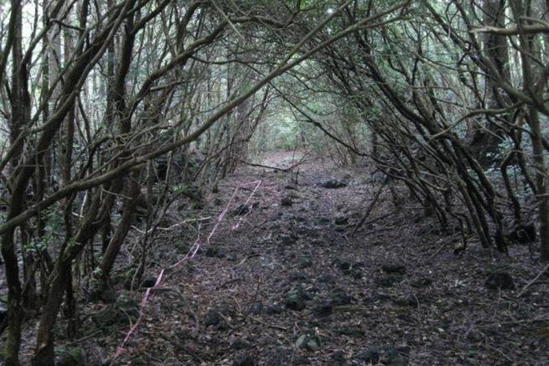 Aokigahara in Japan
