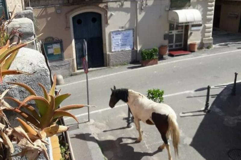 a random horse walking around