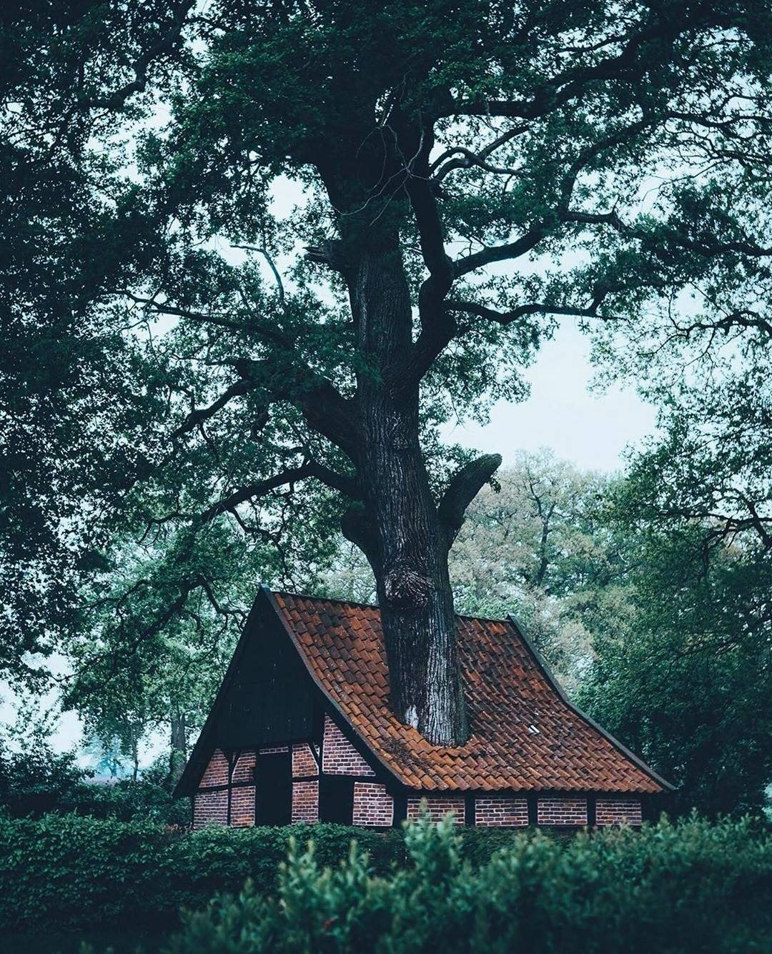 house with a large tree growing through the roof