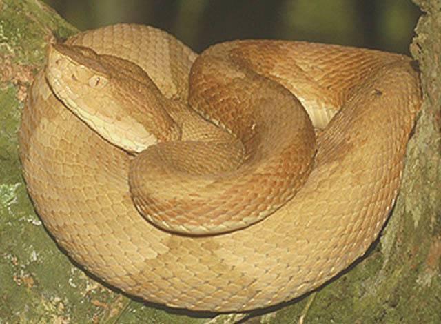 snake on snake island