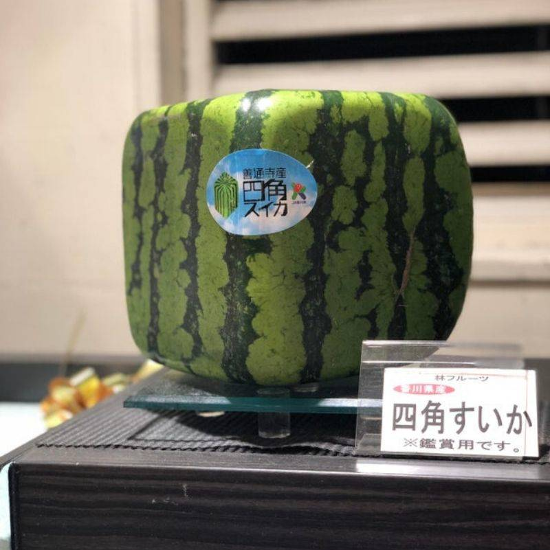 a square shaped watermelon