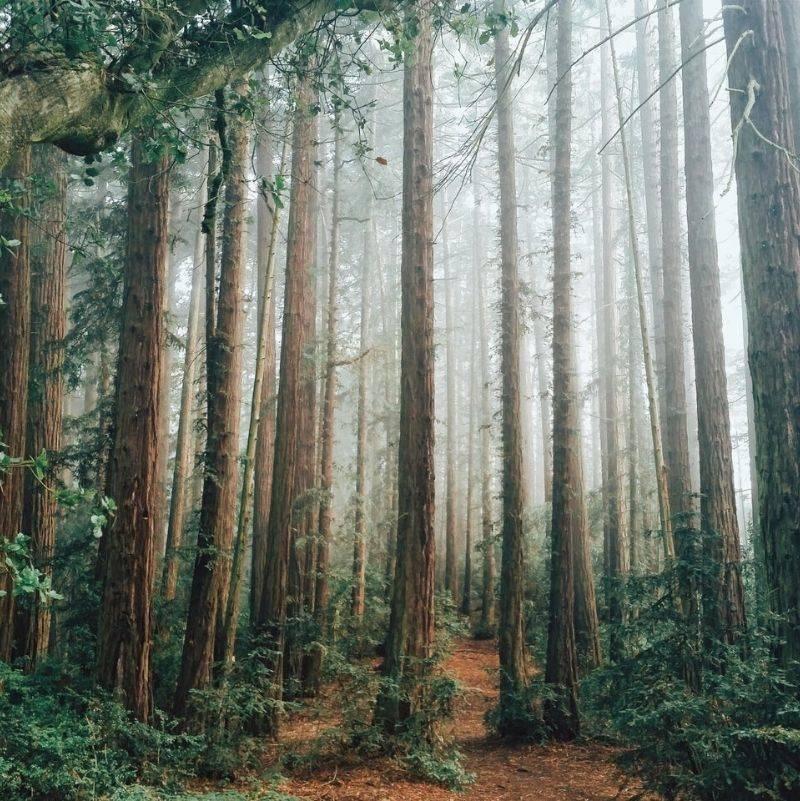 Redwood Regional Park in California