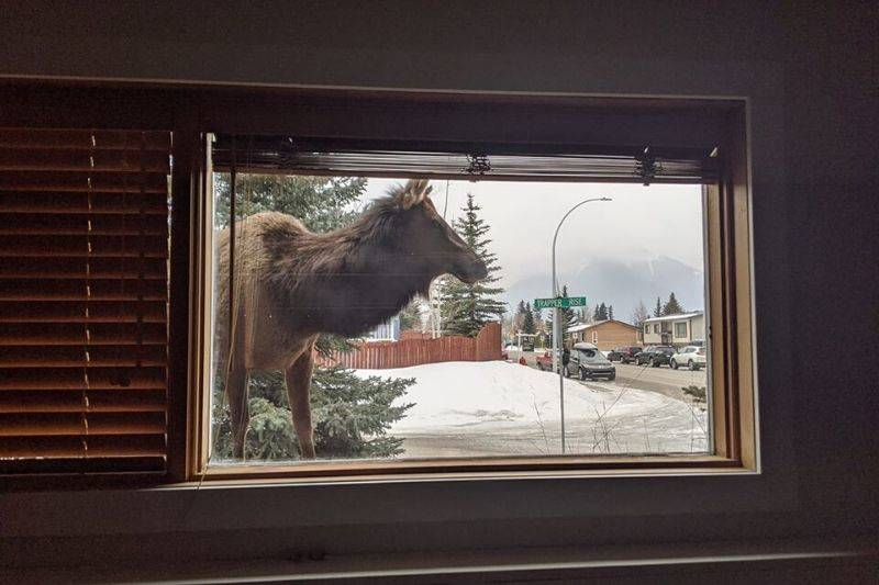 Canmore Alberta view from the window