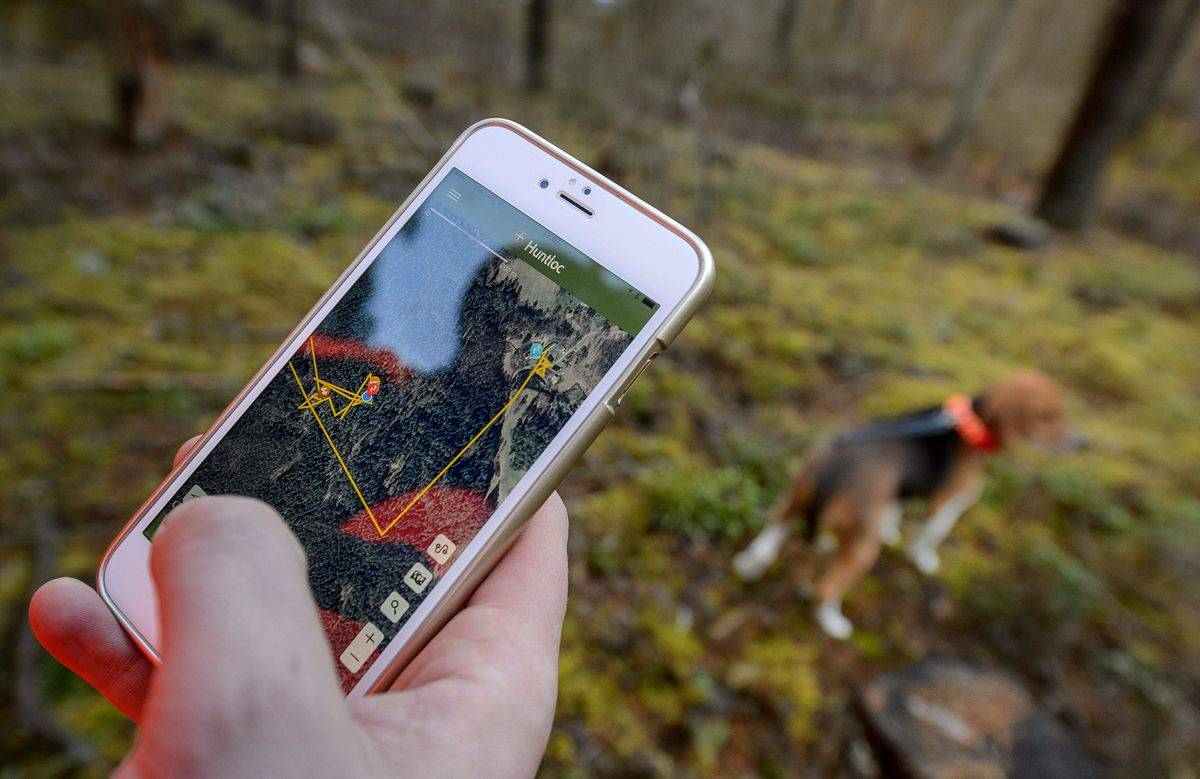 An Estonian hunter uses wifi in the forest.