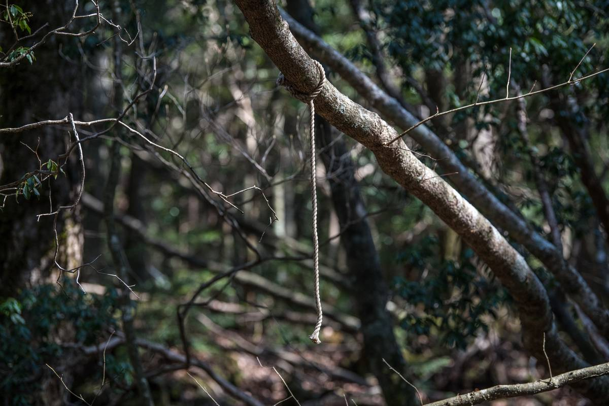 rope hanging off tree branch in aokigahara forest
