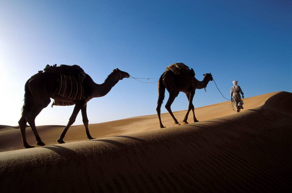 a man walking two camels in the desert