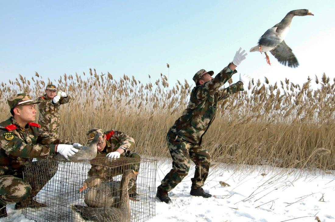 Chinese military men release geese.