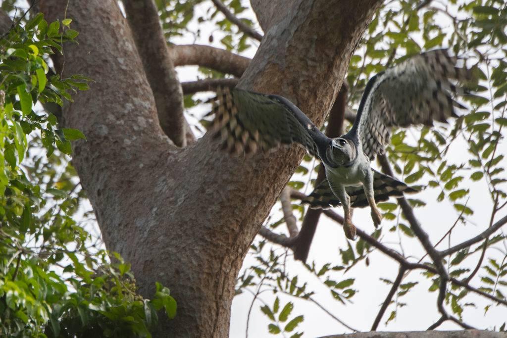 harpy in tree