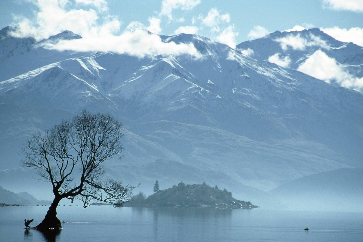 Tree on Lake Wanaka