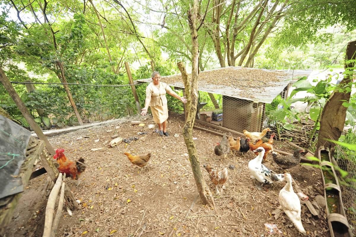 woman on small Guatemalan farm feeding chickens