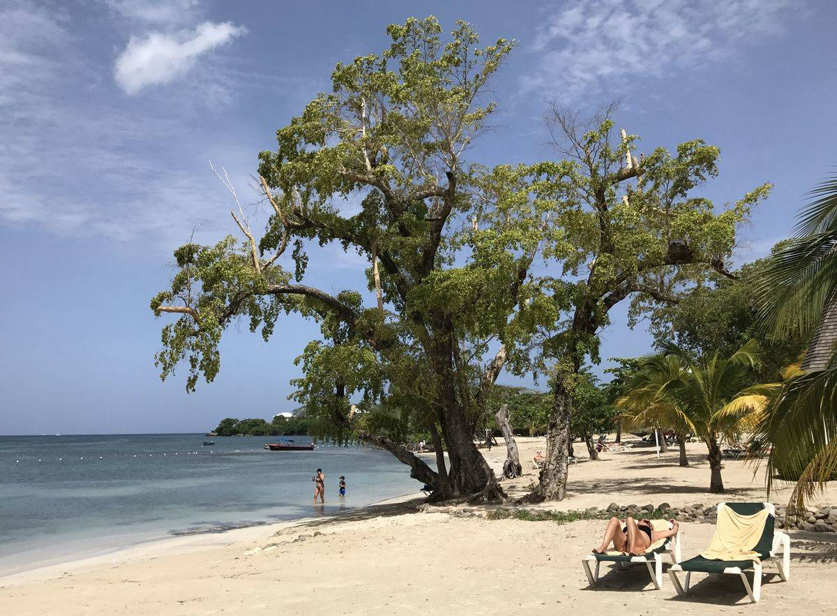 Tourists relax under a tree on Negril beach