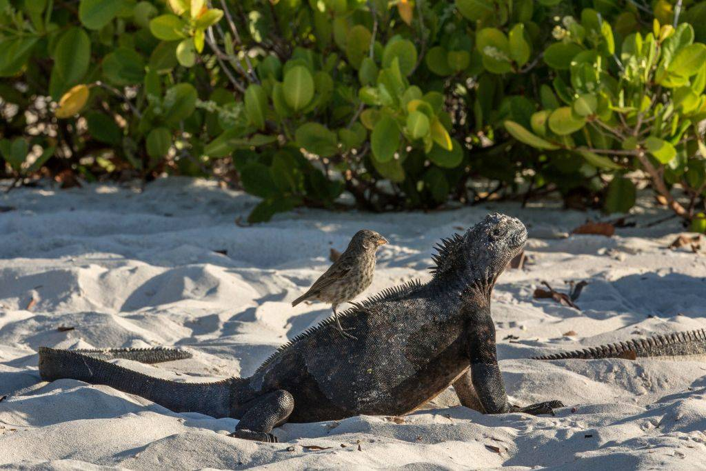 animals from the Galápagos Islands