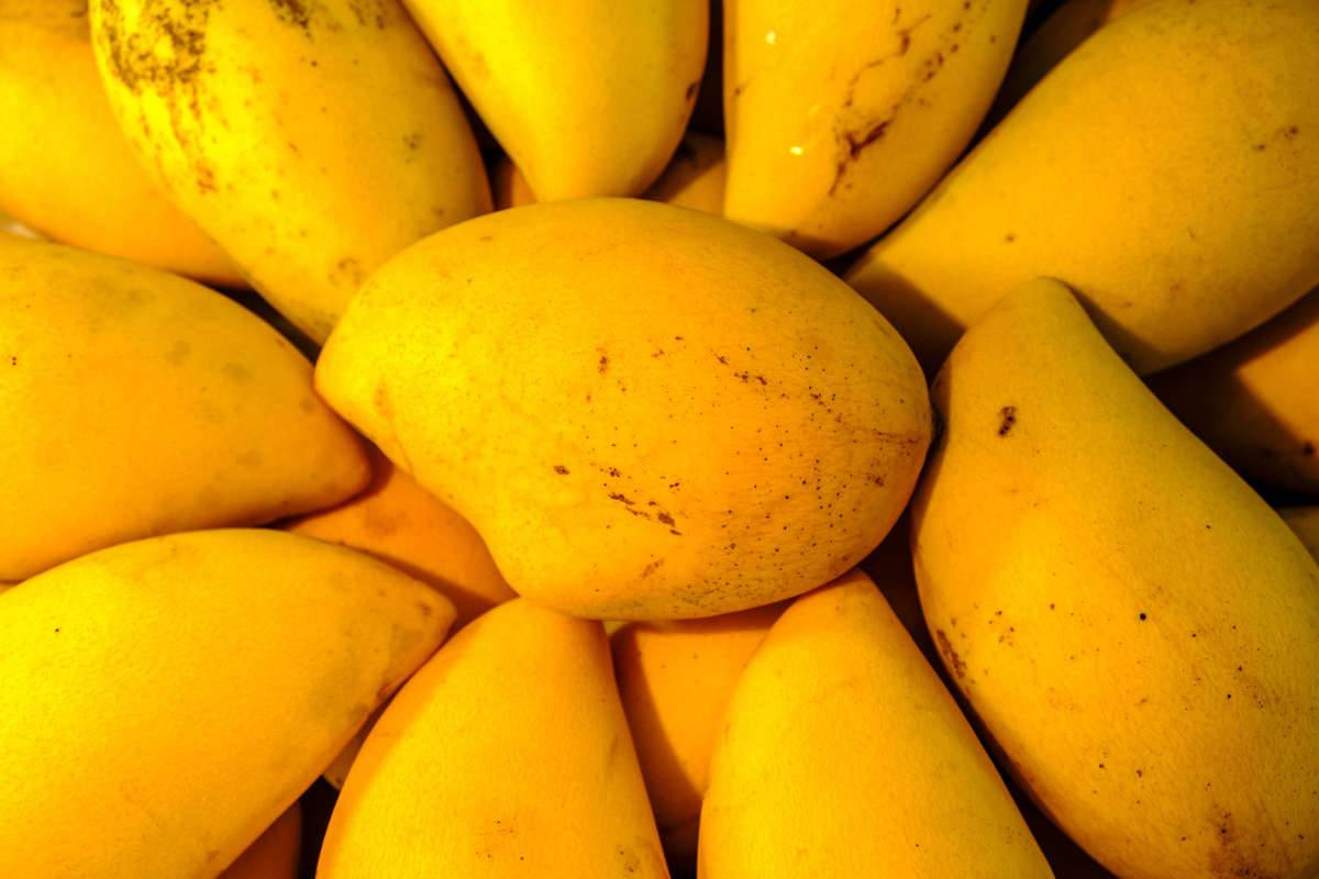 Fresh yellow mangoes are for sale